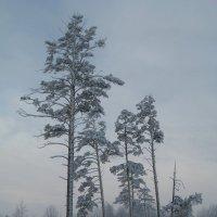 Зимний лес :: Maxim Bondar
