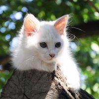 Белая кошка :: Петр Секретькин