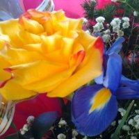 цветочки*_* :: Алина Кузова