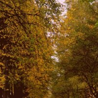 Осень в парке :: Svetlana Tarasova