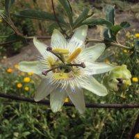 Волшебный цветок) :: Екатерина Чернышова