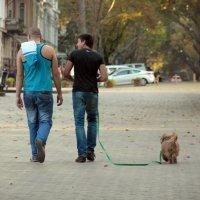 обычная прогулка друзей :: Андрей Бабан