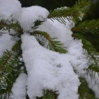 зима :: Екатерина Семерикова