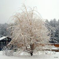 парихмахер Зима... :: Anatoley Lunov