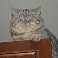Кошак :: Наталья Ахачинская
