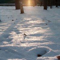 Winter Sun :: Anastasia GangLiON