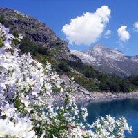 Белоснежный берег озера. :: Жанна Савкина