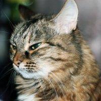 Новогодняя кошка) :: Yana Elistratova