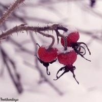зимний шиповник :: Anna Tereikovskaya