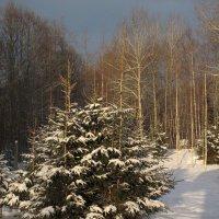 с Рождеством :: Ната Иванова