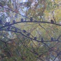 Птицы :: Екатерина Чернышова