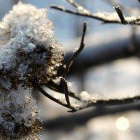 Мороз и солнце :: Елена Васильева
