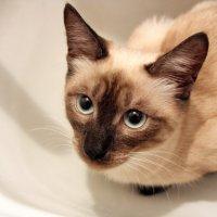 кошка :: Рита Ефремова