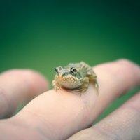 frog :: Татьяна Кирсанова