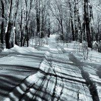 Зимний парк. :: Дмитрий Арсеньев