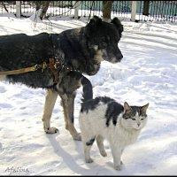 Дружба-это когда смотрят в одном направлении... :: Марина Жилина