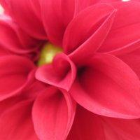 Красный-классный :: Larisa Oparina