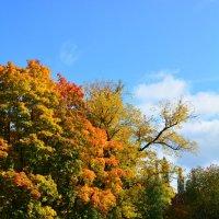 Осенние цвета :: Павел Trump