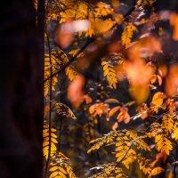 осенний лес.. :: дмитрий посохин