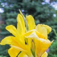 цветок солнца :: Александр Миллер