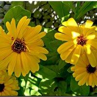 Словно капля солнца в сумерках теней... :: Любовь Чунарёва
