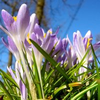 Воспоминания о весне... :: Лия ☼