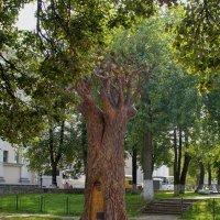 дерево с ухом :: gribushko грибушко Николай