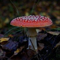 украшение мрачного леса :: gribushko грибушко Николай