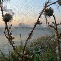 время паутинок..(2) :: Александр Герасенков