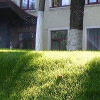 Брызги на траву :: Александр Скамо