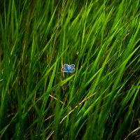 Бабочка :: Артем Мариев