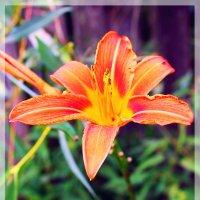 Цветы в нашей жизни :: Allekos Rostov-on-Don