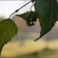 Осень плакала... :: анна нестерова