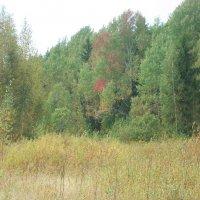 Осенний лес :: Виктор Елисеев
