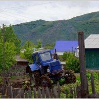 Запустили в огород... :: Кай-8 (Ярослав) Забелин