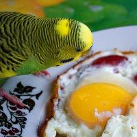 Пришло время завтрака :: Пётр П