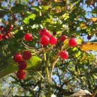 По садам гуляет осень... :: ТАТЬЯНА (tatik)