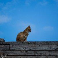кошка :: игорь душкин