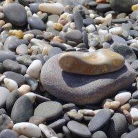 Морские камешки :: Нина Корешкова