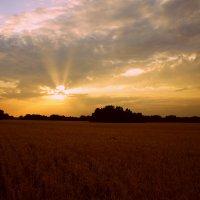 Солнце садится..катится за горизонт,ночь как огромная птица свой начинает облет. :: Елена Прихожай