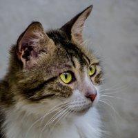 Мисс-мяу нашего двора!-из серии кошки очарование моё! :: Shmual Hava Retro