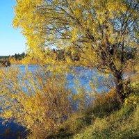 Золотая осень Сибири :: alemigun