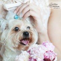 собака на свадьбе :: Екатерина Гревцова