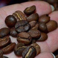 зерна кофе на ладони :: Елена Дранищева