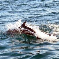 -Мама, акула, акула!, - кричали дети на лодке :: ID@ Cyber.net