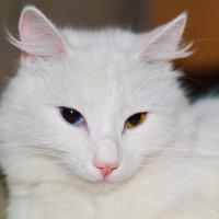 Кошка Лиса. :: Павел Бескороваев
