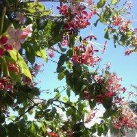 Неизвестная тропическа лиана. :: Жанна Викторовна