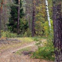В сентябрьском лесу... :: mv12345 элиан