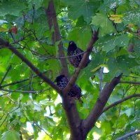 Птички :: Anna Ganchurina