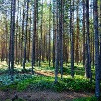 Просто осенний лес... :: Александр Кокоулин